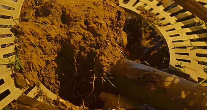 Sau bão lộ sự cẩu thả: Chúng tôi không trồng như vậy?!
