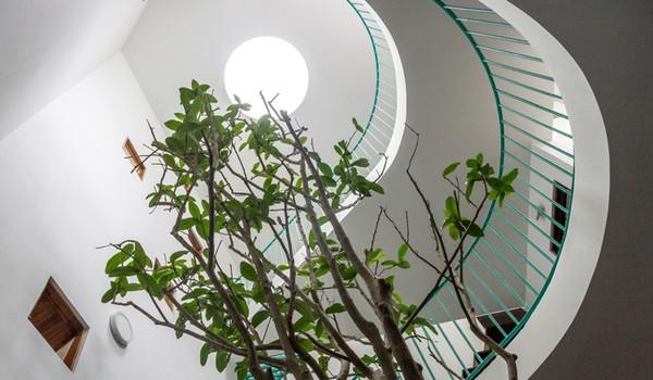 Ngôi nhà 80m² ở Hà Nội mang cả thiên nhiên vào từng góc nhỏ