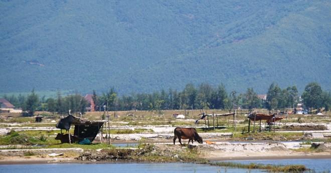 Từ tâm chấn Formosa: Chát mặn diêm dân