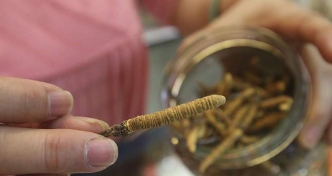Đắt hơn vàng, đông trùng hạ thảo giả xuất hiện tràn lan