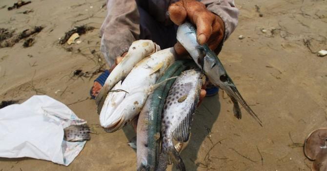 """Tháng 9 mới công bố cá biển """"Formosa"""" có ăn được hay chưa"""