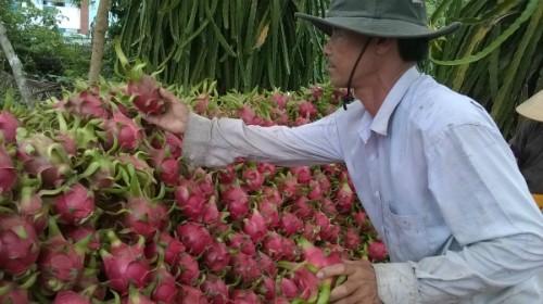 Người Trung Quốc bị phạt vì mua thanh long Việt trái phép