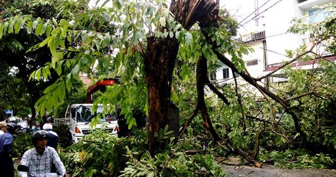 """Bão số 4 """"tấn công"""" miền Trung: Cây xanh ngã đổ la liệt, người đi đường bị gió thổi liêu xiêu"""