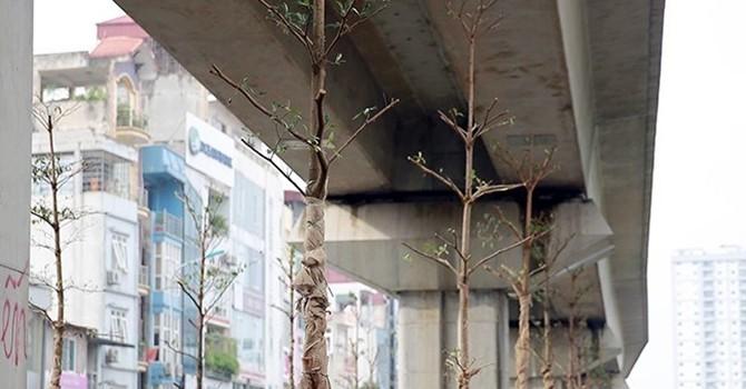 """Lãnh đạo Công ty cây xanh Hà Nội nói gì về việc """"trồng cây dưới gầm cầu""""?"""