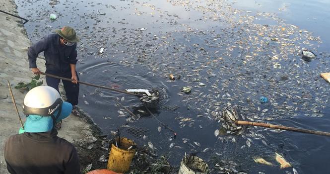 Đà Nẵng: Cá chết hàng loạt ở kênh Đa Cô do thiếu oxy