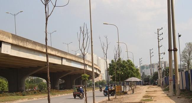 """Hà Nội """"cấm cửa"""" doanh nghiệp trồng cây bị chết khô"""
