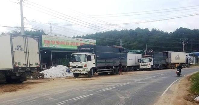 Phát hiện điểm biến nông sản Trung Quốc thành rau Đà Lạt