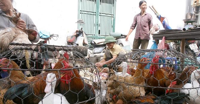Sẽ cấm bán gà vịt sống tại chợ?