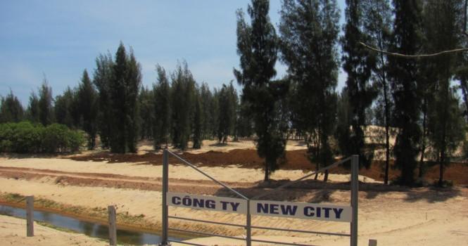 Chưa có quyết định giao đất đã dọn rừng phòng hộ làm dự án