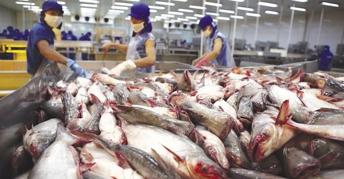 Tôm và cá da trơn gặp khó, nguy cơ mất thị trường