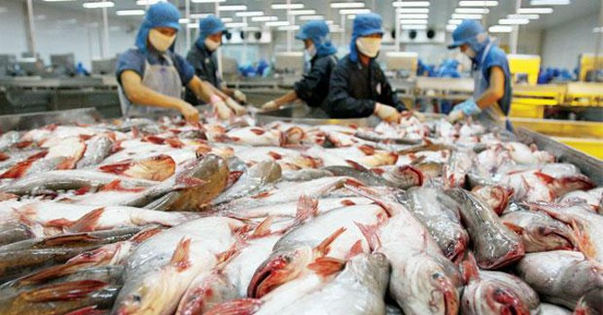"""2015: Năm """"lao đao"""" của cá tra Việt Nam vào thị trường Mỹ"""