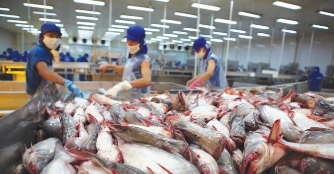 Công bố chính thức tiêu chuẩn chọn doanh nghiệp xuất khẩu cá tra vào Hoa Kỳ