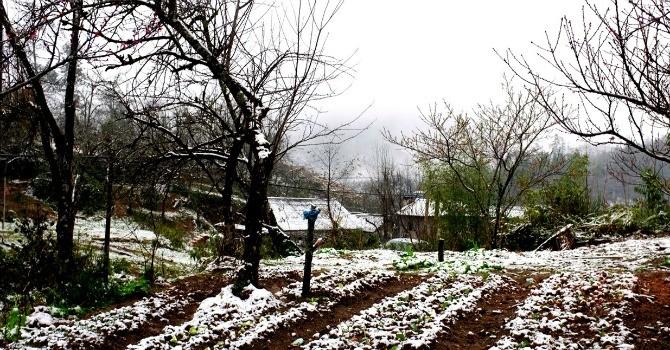 Miền Bắc tiếp tục rét hại, Sa Pa, Mẫu Sơn dưới -3 độ C, tuyết rơi nhiều