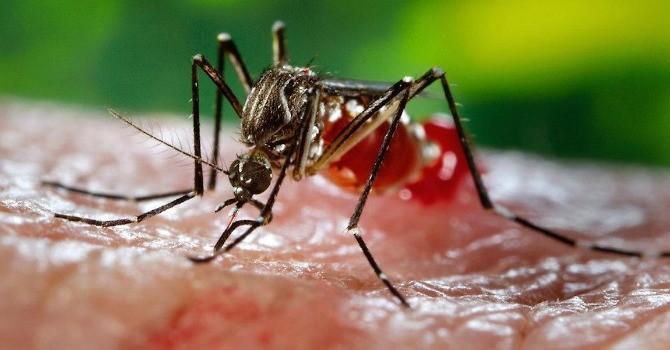 Bộ Y tế: Nâng mức phòng chống virus Zika lên cấp độ 2