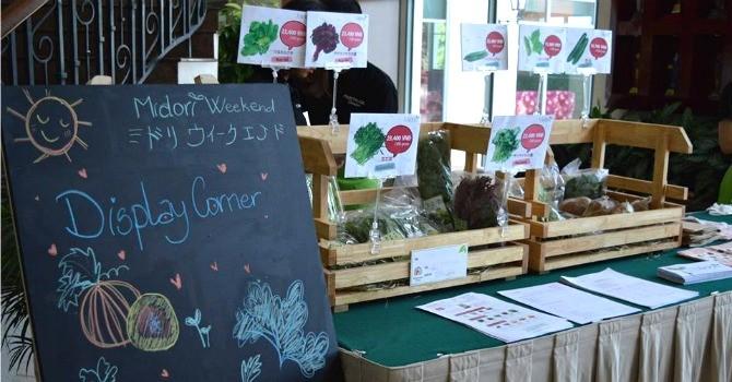 Bán rau sạch cho người ngoại quốc: Tìm thành công từ thị trường ngách